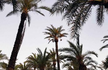 palmeras en torremolinos